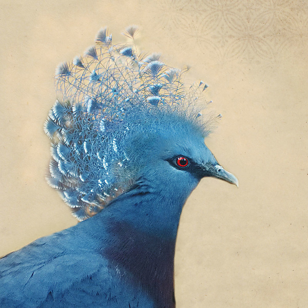 Song of a Blue Crowned Pigeon I