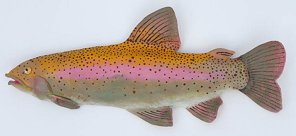 Colorado Trout