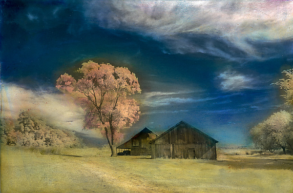 Two Barns and Tree