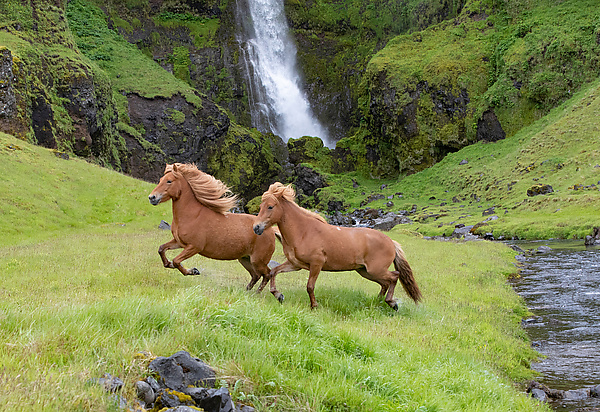 Two Horses at the Waterfall