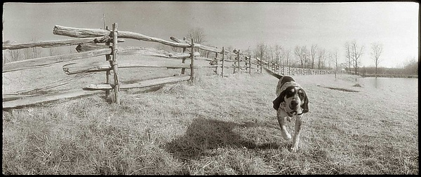 Calhoon, the Coon Hound, 1983
